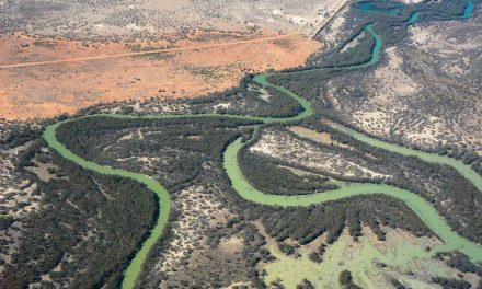 UNDER FIRE! Murray-Darling Basin Plan in the spotlight…again