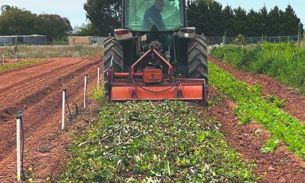 Family growers forced to 'turn in' crops