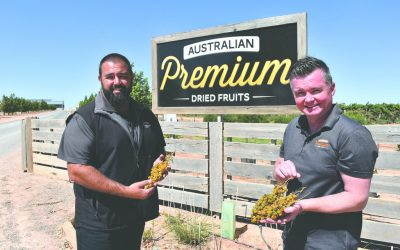 APDF offers table grape growers a drying option