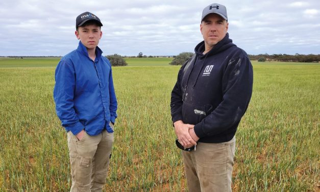 Patchy rainfall is the story of Millewa's grain season